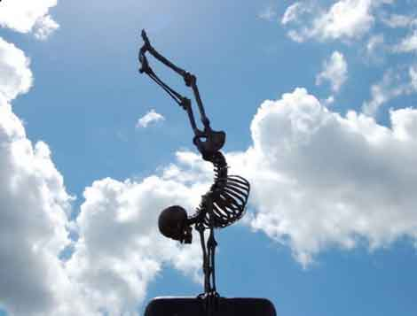 Bone Health Essentials